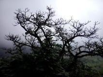 bezlistny drzewo obrazy royalty free