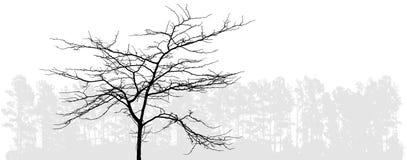 bezlistny drzewo Zdjęcie Royalty Free