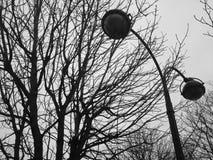 Bezlistny drzewo i CCTV kamery obrazy royalty free