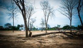 Bezlistny drzewo i niebo zdjęcia stock