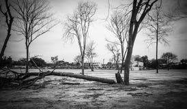 Bezlistny drzewo i niebo fotografia stock