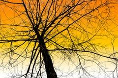 Bezlistny drzewo na niebie fotografia royalty free