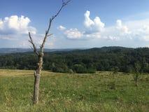 Bezlistny drzewo na wzgórzu obraz stock