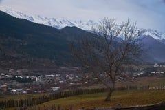 Bezlistny drzewo w Kaukaz górach w Svaneti, region Gruzja zdjęcia stock