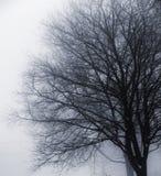 Bezlistny drzewo w mgle zdjęcia stock