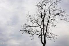 Bezlistny drzewo w zima sezonie obraz royalty free