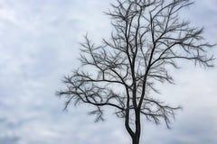 Bezlistny drzewo w zima sezonie obraz stock