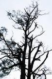 Bezlistny drzewo z białym tłem ilustracji