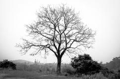 Bezlistny gałąź drzewo czarny i biały zdjęcia stock