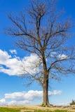Bezlistny Kwietnia drzewo na wzgórzu przeciw niebu zdjęcie royalty free