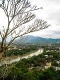 Bezlistny plumeria i widok Luang Prabang zdjęcie royalty free