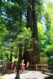 Bezoekers aan Muir Woods National Monument Royalty-vrije Stock Foto's