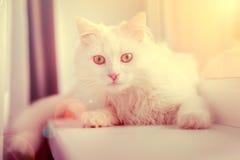 Bezorgd kijk van een kat Stock Afbeeldingen