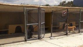 Bezorgde Gekooide Honden, Hoektanden, Verwaarlozing, Misbruik stock videobeelden