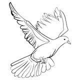 Bezpłatna latająca biel gołąbka, nakreślenie wektoru ilustracja Obrazy Royalty Free