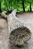 Bezpłatnego pieniądze drzewo Obraz Royalty Free