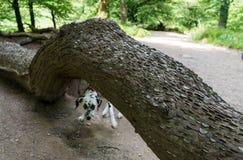 Bezpłatnego pieniądze drzewo Fotografia Royalty Free