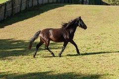 Bezpłatni konie w łące obrazy stock