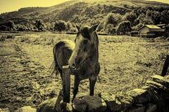 Bezpłatny koń na górze fotografia stock