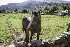 Bezpłatny koń na górze zdjęcia stock
