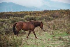 Bezpłatny koń w wsi fotografia stock