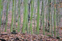 Bezpłatny las w dniu zdjęcia royalty free