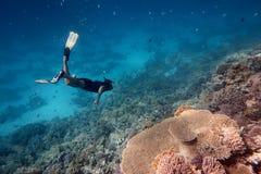Bezpłatny nurek w rafie koralowej zdjęcie stock
