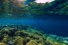 Bezpłatny nurka pływanie w oceanie, podwodna fotografia z koralami zdjęcie royalty free