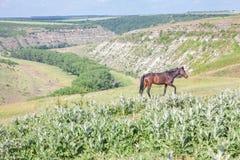 Bezpłatni koni przespacerowania Zdjęcia Royalty Free