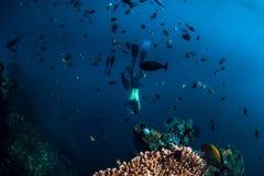 Bezp?atny nurka m??czyzny nur podwodny przy shipwreck w Bali Freediving w oceanie zdjęcia stock