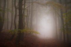 Bezpański przez lasu obrazy royalty free