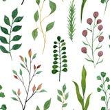 Bezszwowa akwareli ilustracja Zieleni gałąź rośliny i liście ilustracji
