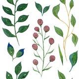 Bezszwowa akwareli ilustracja Zieleni gałąź rośliny i liście ilustracja wektor