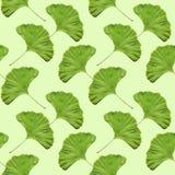 Bezszwowa ginkgo liścia wzoru tapeta Obrazy Royalty Free