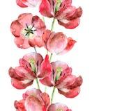 Bezszwowa granica tulipany Zdjęcia Royalty Free