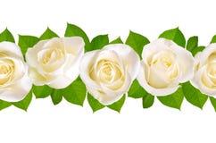 Bezszwowa granica z białymi różami pojedynczy białe tło zdjęcie stock