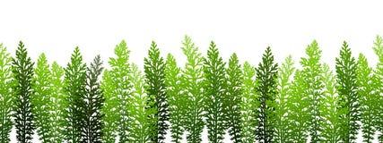Bezszwowa granica z zieloną trawą Zdjęcia Stock