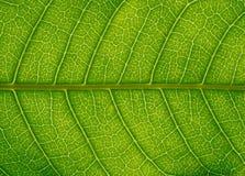 bezszwowa liść tekstura Zdjęcia Stock