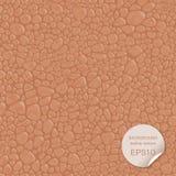 Bezszwowa tło skóry tekstura również zwrócić corel ilustracji wektora Zdjęcia Royalty Free