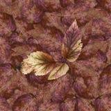 Bezszwowa tło wzoru tekstura kamienni jagoda liście ustawia 1 Obraz Stock