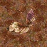Bezszwowa tło wzoru tekstura kamienni jagoda liście ustawia 1 Zdjęcie Stock