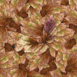Bezszwowa tło wzoru tekstura kamienni jagoda liście ustawia 1 Zdjęcia Royalty Free