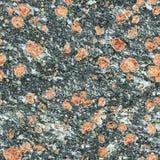 Bezszwowa tekstura - powierzchnia naturalny kamień z czerwonymi punktami Obrazy Stock