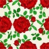 Bezszwowa tekstury czerwieni róża z pączków i liści rocznika świątecznego tła wektorowy ilustracyjny editable Obraz Royalty Free