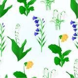 Bezszwowa tekstury wiosna kwitnie lelui dolina, śnieżyczki, bluebell kampanula i pierwiosnku rocznika wektor, Zdjęcie Stock