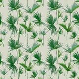 Bezszwowa Tropikalna palma Opuszcza tło Egzotyczna lato tekstura ilustracja wektor