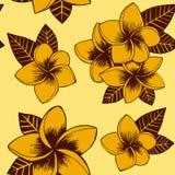 Bezszwowa wektorowa żółta kwiecista ręka rysujący plumeria wzór royalty ilustracja