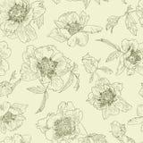 Bezszwowa wzór linia kwitnie peoni, jasnozielony tło Peonie monochromatyczne Zdjęcia Stock