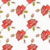 bezszwowa wzór róża Fotografia Royalty Free