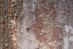 Bezszwowa Zrudziała tekstura jako Rdzewiejący metalu tło zdjęcie royalty free
